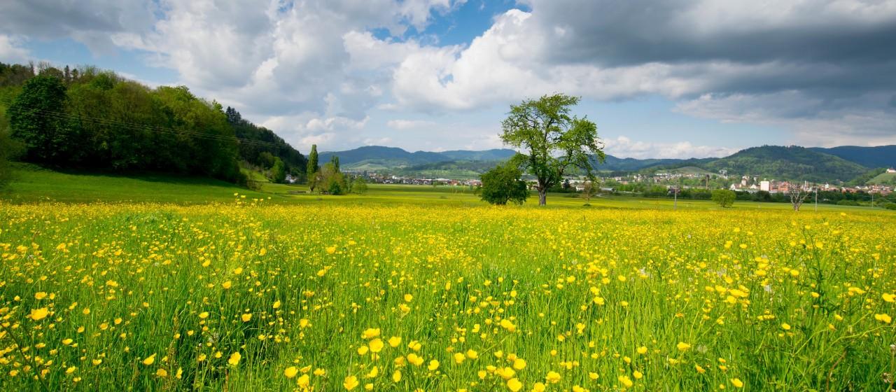 """Der Wanderweg """"Waldmythenweg"""" im Bergischen"""