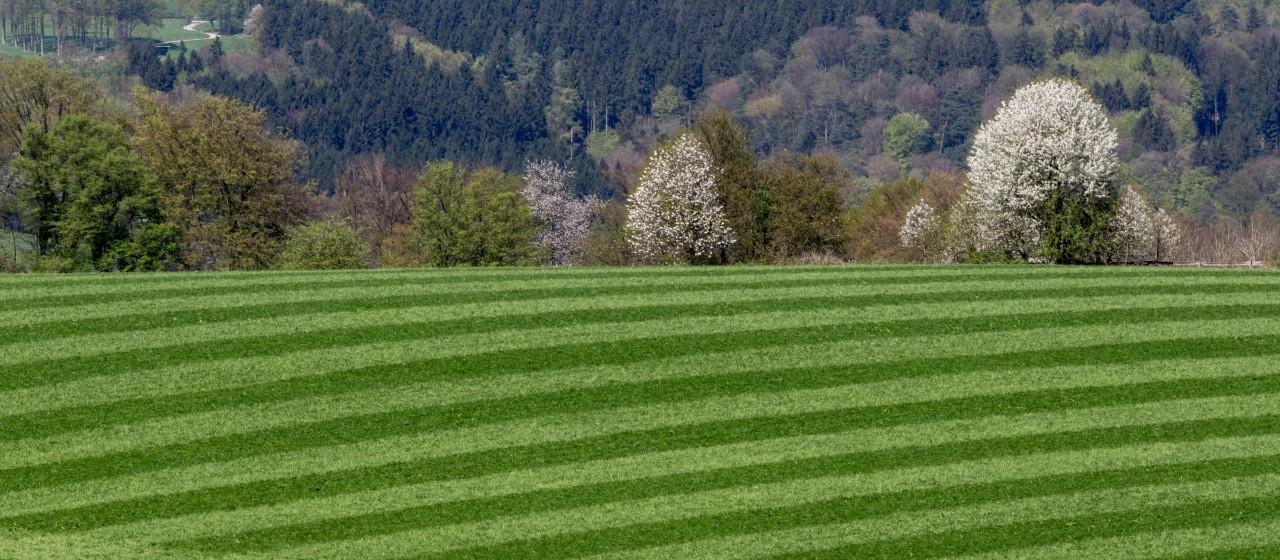 Linien-Muster auf einem Rasen in Overath